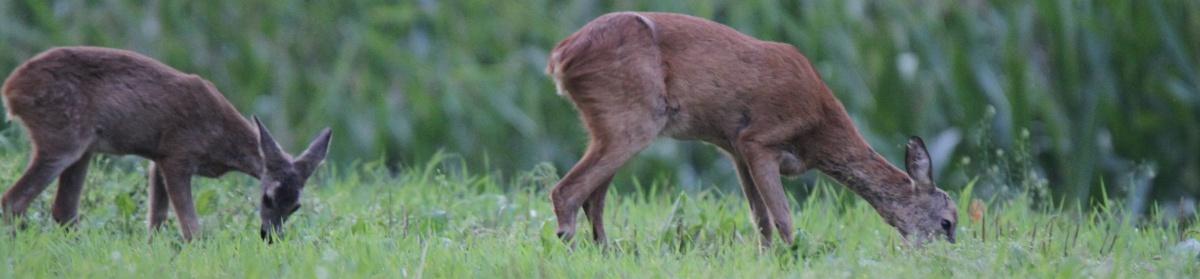 Jagd Oberkulm